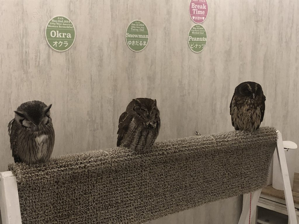 A perch with three small owls on it. Their names are on the wall behind them: Okra, Snowman, and Peanuts.