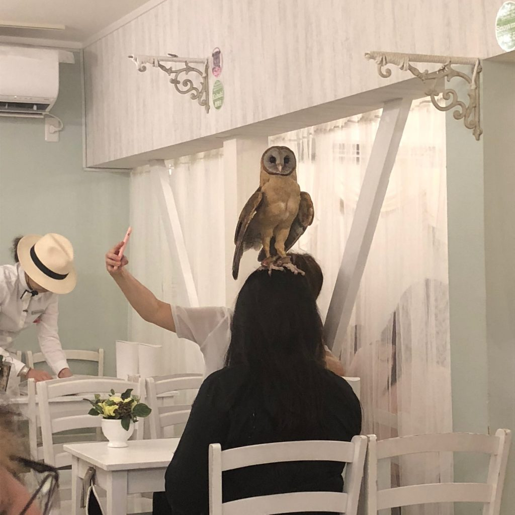 An owl standing on the head of one of the guests.