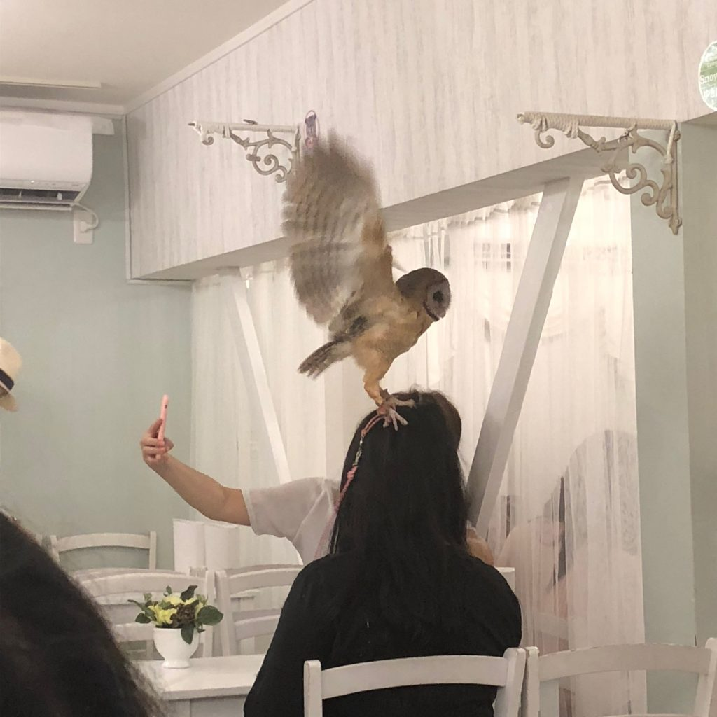 In this picture, the owl is flapping its wings.