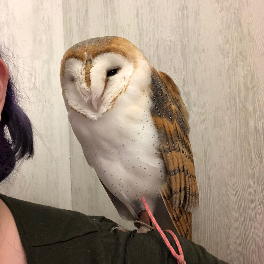 The owl's eyes are open now!