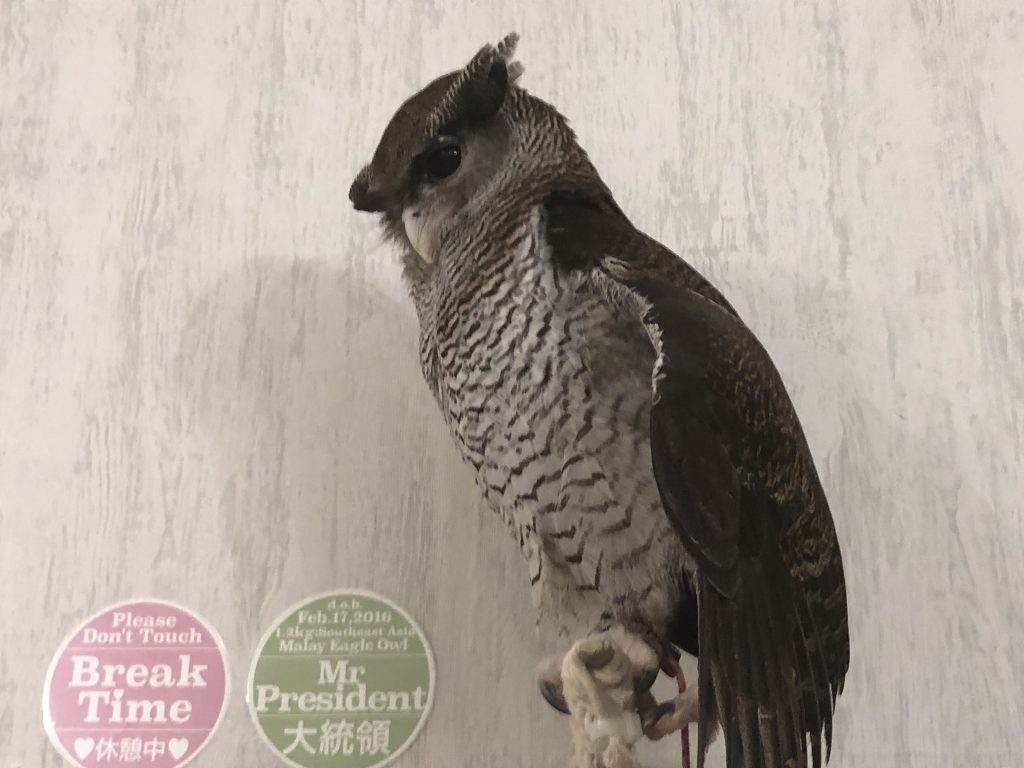 A very regal-looking owl on a high perch looking down at the guests.