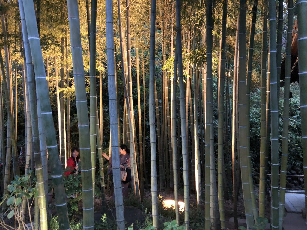 A thick little bamboo thicket lit up for the evening. Two Japanese women are taking selfies inside it.