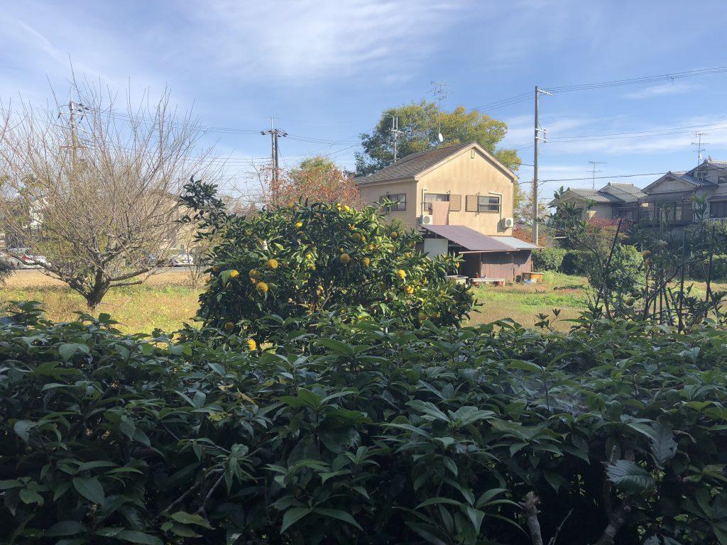 A photo of some neighborhood houses and a fruit tree.