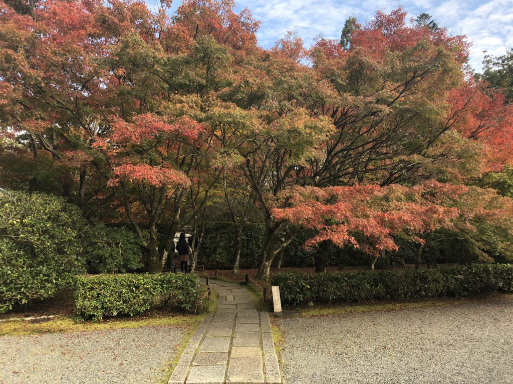 A stone path leading into some maple trees that are just turning red.