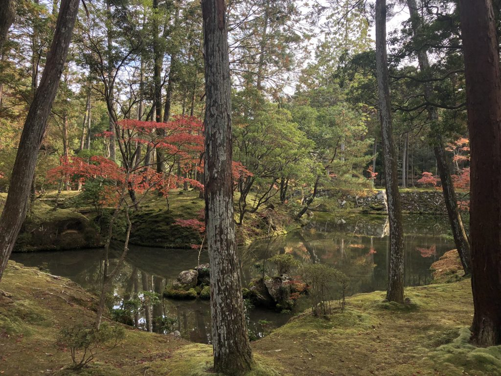 A small pond surrounded by moss.