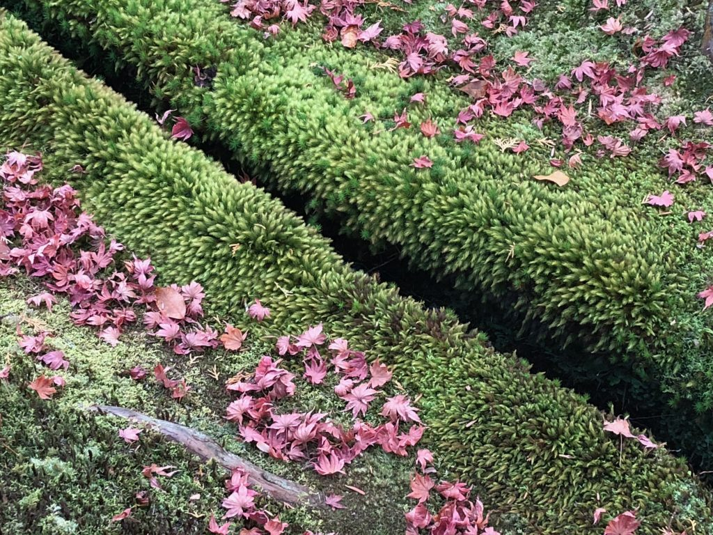 A crevice that's blanketed by tufty moss and red maple leaves.
