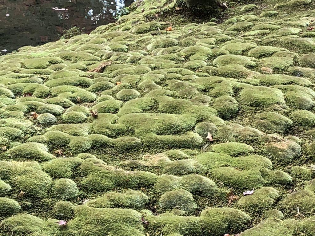 Bumpy moss.