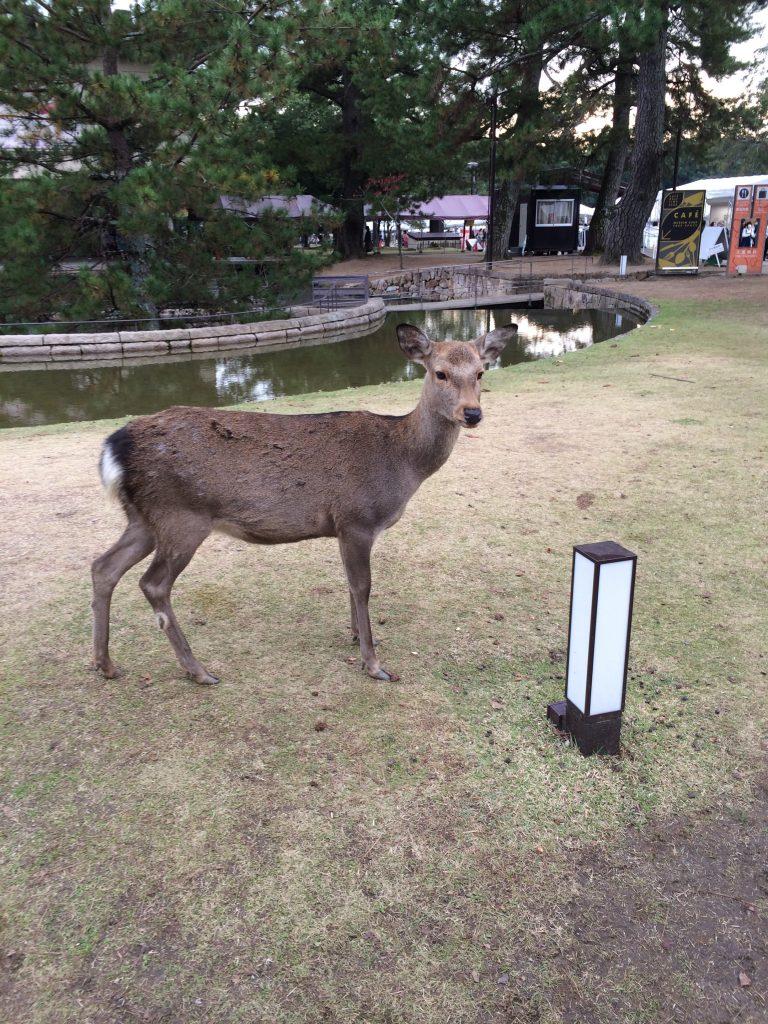 A deer staring me down.