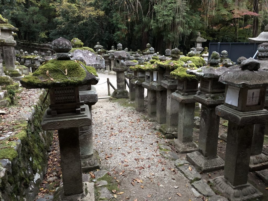 A garden full of mossy stone lanterns.